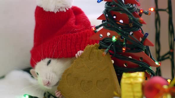 Thumbnail for White Rat in Red Cap Gnaws Cookie
