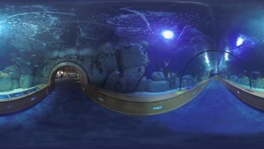 Thumbnail for 360 VR Inside Oceanografic in Valencia, Spanien
