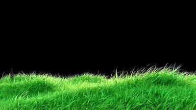 Grass  Wind Loop