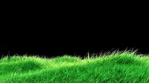 Gras-Wind-Schleife
