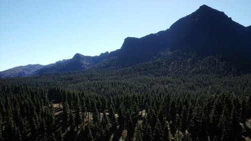 Panorama of Cone Forest at Mountains