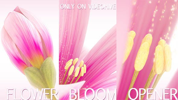 Thumbnail for Flower Bloom Logo