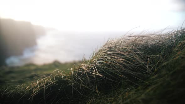 Wind Shaking The Grass In Slow Motion