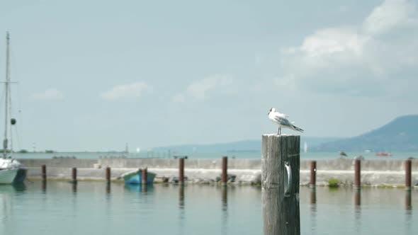 Thumbnail for Bird 01