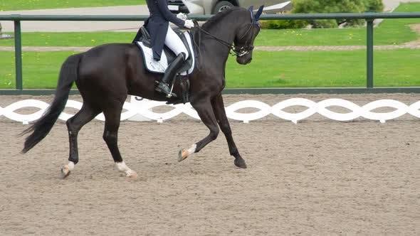 Graceful Black Horse Gallops