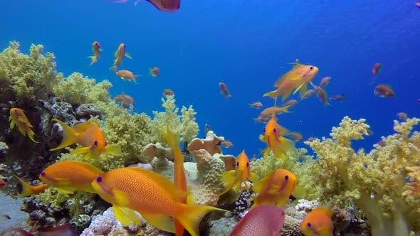 Cover Image for Underwater Colorful Fishes with Blue Water Background