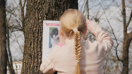 A Girl Is Looking for a Lost Dog - a Poster About a Missing Pet Is Placed on the Tree
