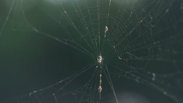 Thumbnail for Cobweb
