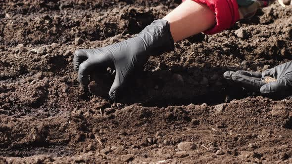 Thumbnail for Planting seeds to soil