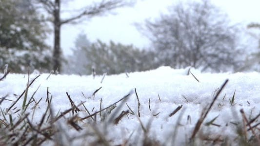 Thumbnail for Snowing Ground - Grass In Winter Forest