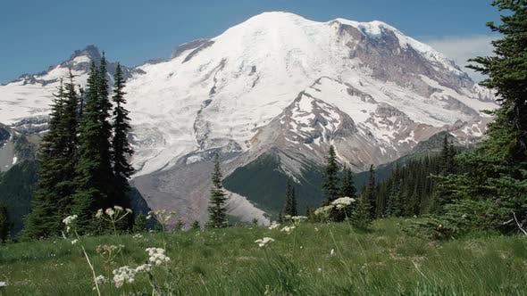 Iconic Mt Rainier With Blue Sky Background