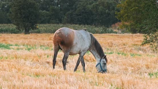 Beautiful Horses in the Green Meadow