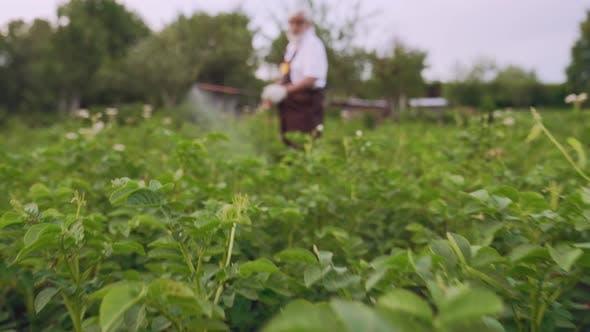 Thumbnail for Gardener Sprinkles Potato with Sprayer From Colorado Beetles