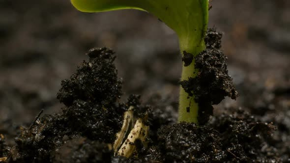 Thumbnail for Growing Green Plants Agriculture
