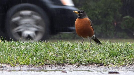 Thumbnail for Rain - 15 - Highway Cars & Sidewalk Robin