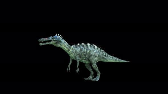 4K Suchomimus Dinosaur