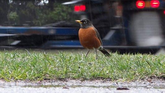 Thumbnail for Rain - 16 - Highway Cars & Sidewalk Robin