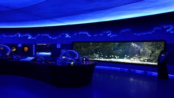 Cover Image for Aquarium With Fish