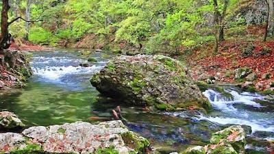 Little Waterfalls in a Peaceful Wood