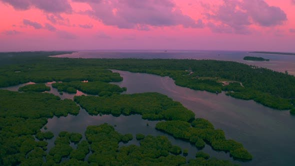 Cover Image for Aerial View of Mangrove Forest and River on the Siargao Island at Sunset Time. Mangrove Jungles