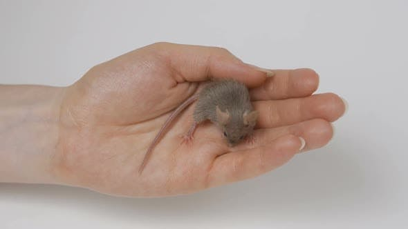 Cover Image for a Young Girl Is Holding a Gray Fluffy Mouse