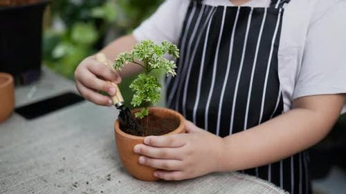 Close up Girl planting trees decoration