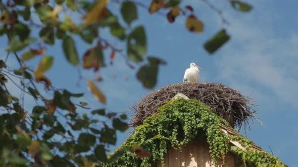 Thumbnail for The Stork In The Nest