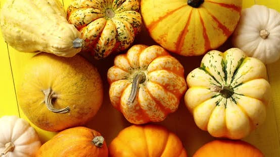 Thumbnail for Pile of Ripe Pumpkins on Yellow