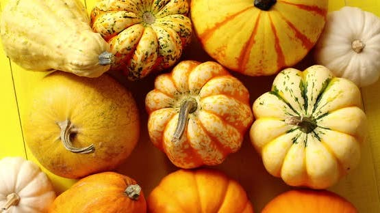 Pile of Ripe Pumpkins on Yellow
