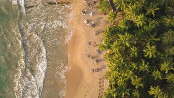 Thumbnail for Romantic Sunset on a Tropical Beach with Palm Trees. Sri Lanka