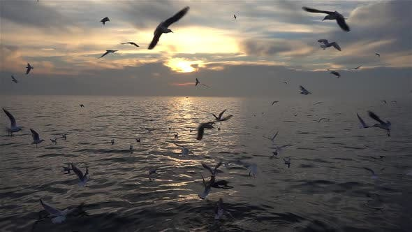 Thumbnail for Flock Of Seagulls At Sunset