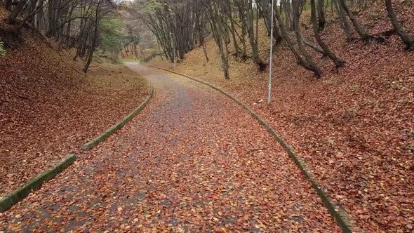 Thumbnail for Autumn park in November