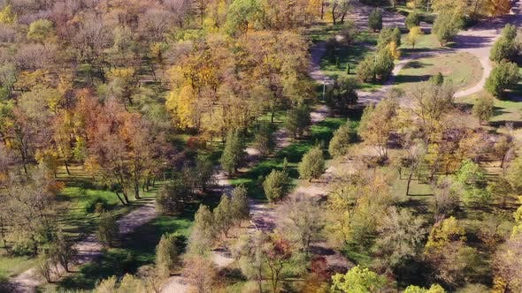 Thumbnail for Autumn trees in a natural park