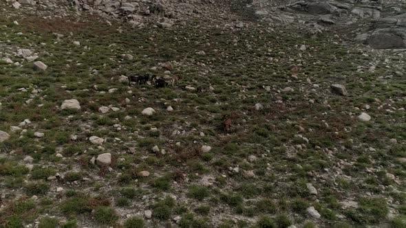Thumbnail for Wild Animal Mountain