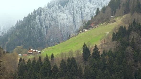 Small Meadows and Wooden Village Houses in the Forest