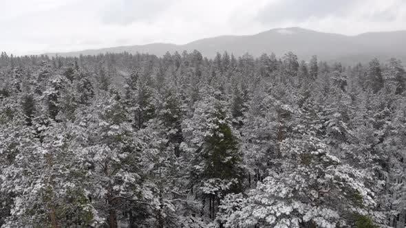 Thumbnail for Von oben nach unten Luftbild des schneebedeckten Waldes