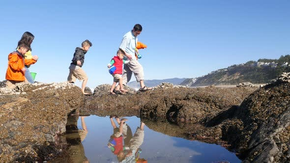 Thumbnail for Family walking on beach with tide pools