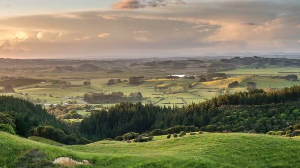 Panoramic View of Rural Natural Scenery of New Zealand at Golden Light of Sunny Summer Evening