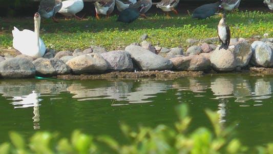 Thumbnail for Animals near the Lake