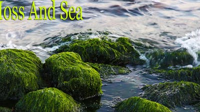 Moss And Sea