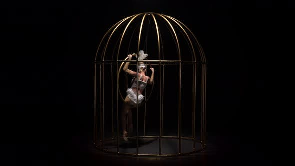 Thumbnail for Aerial Acrobatics on a Rotating Hoop in a Metal Cage