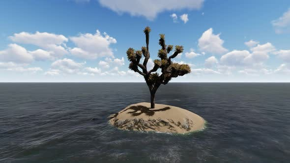 Thumbnail for Trees grow in the middle of the sea during the day