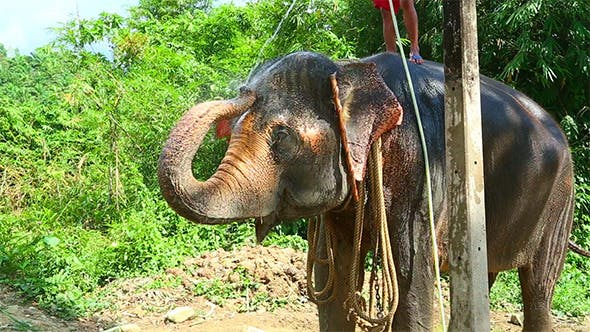Thumbnail for Washing the Elephant