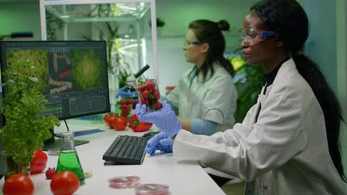 Pharmaceutical Scientist Looking at Strawberry Injecting with Pesticides