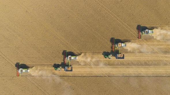 Thumbnail for Luftaufnahme von Erntemaschinen, die im Weizenfeld arbeiten, Kombinieren Sie die Ernte von Landwirtschaftsmaschinen