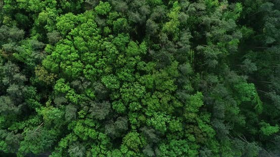 Forest Swaying Trees From Above 01