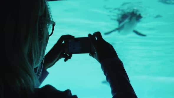 Thumbnail for Aquarium Visitor Photographs a Penguin Through the Glass in the Pool Wall