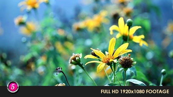Thumbnail for Flower 4