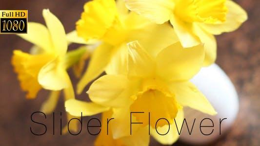 Thumbnail for The Flower