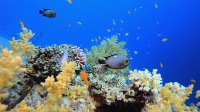 Tropical Corals World
